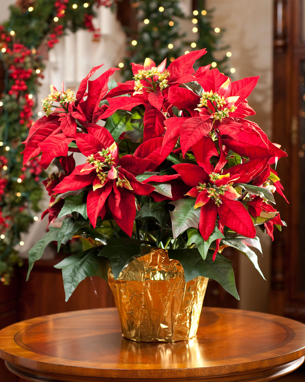 Poinsettias are here spring branch presbyterian church for Poinsettia arrangements
